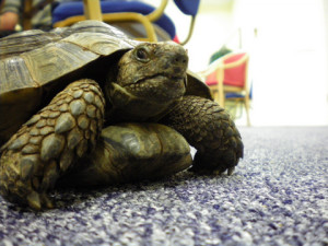 tortoise party 2011 008